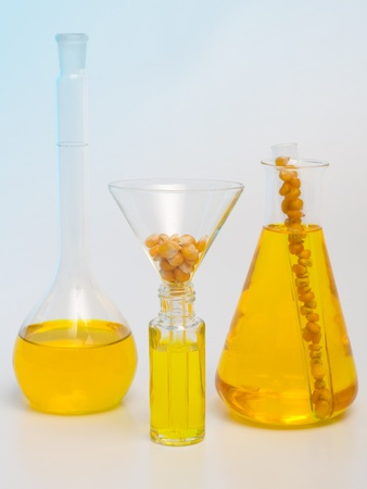 bio fuel: Different samples of biofuel made in laboratory from corn seeds Stock Photo