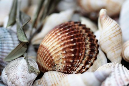 snorkelling: brown sea shell with beige shells  Stock Photo