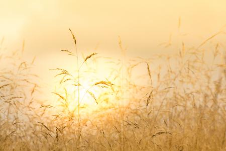 sunset across the cornfields Stock fotó