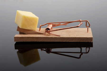 mouse: A mousetrap with cheese on it, isolated with reflection