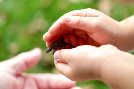 a child playing with a little animal, giving it to his father Stock Photo