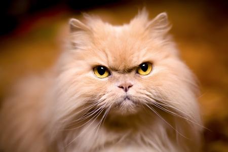 Cut cat behaving like a cat, front view portrait