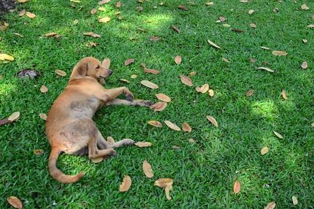 Dog Relax Stock Photo
