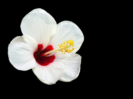 White Flower3 Stock Photo
