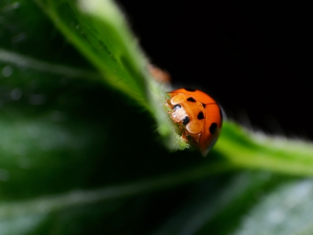 Small world of ladybug