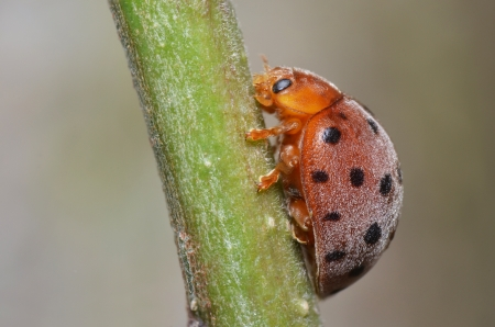 Big lady bug photo