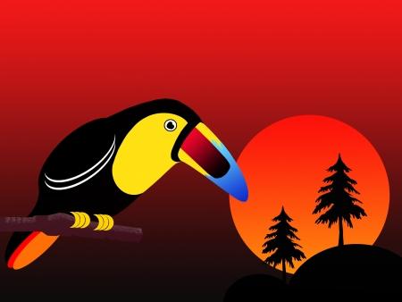 cartoon image of hornbill photo