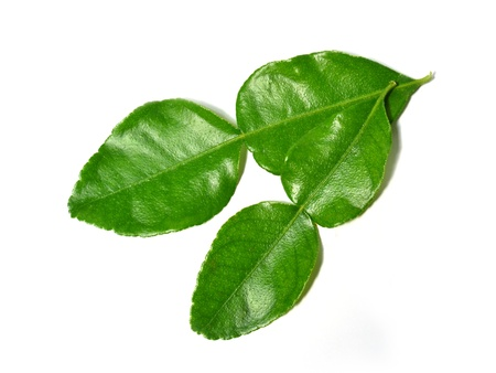 Kaffir Lime leaves isolated on white photo