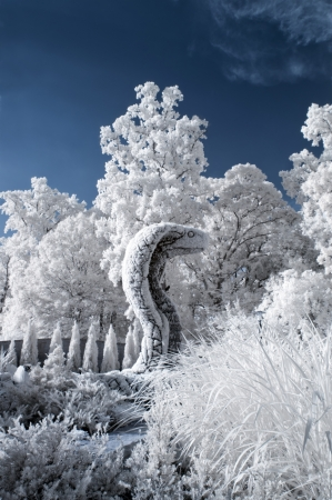 Big snake in botanical garden  near infrared  photo