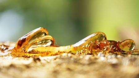 Solid amber resin drops on a  tree trunk   Banco de Imagens