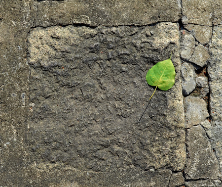 The detail texture of stone and green leaf photo