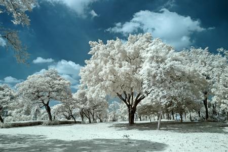 public park: Parque p�blico en Nontaburi, Tailandia admitida Infrarrojo Cercano