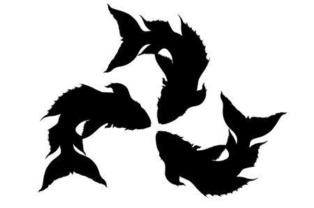 Silhouette of freshwater fish,Thailand photo