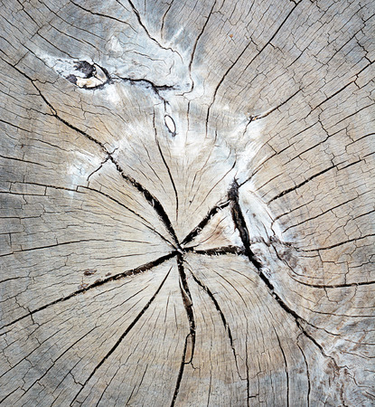 cir: A close up view of an weathered old driftwood stump that shows the radial pattern of tree Stock Photo