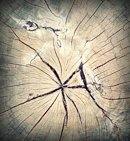 cir: A close up view of an weathered old driftwood stump that shows the radial pattern of tree, process with vintage flim style