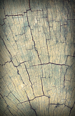 Old cracked tree stump wood texture abstract ,process with vintage flim style