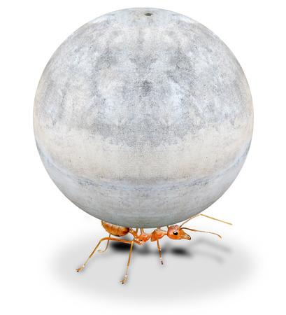 mighty ant holding heavy stone on white background Stock Photo