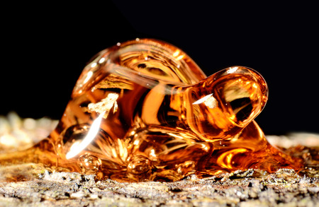 Solid amber resin drops on a tree trunk. Stock Photo