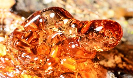 Solid amber resin drops on a tree trunk. Zdjęcie Seryjne