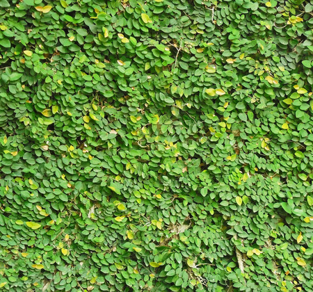 Close-up image of green leaves pattern on the wall photo