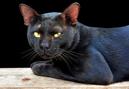 Street black cat on black background photo
