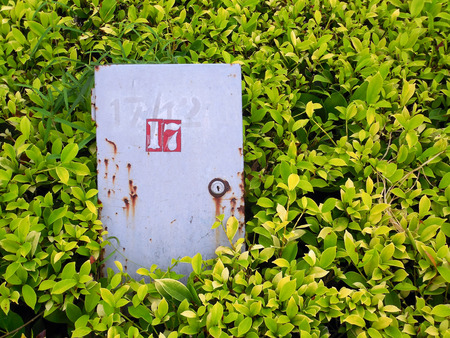 control box: Outdoor electric control box in the natural shrub