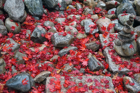 lightsome: Red maple leaves fell on rock after the rain.