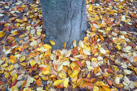 leaves falling: leaves falling under the tree Stock Photo