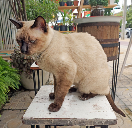 small table: brown cat sit on small table