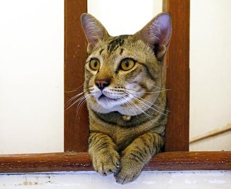 guard rail: Cat sitting on the guard rail.