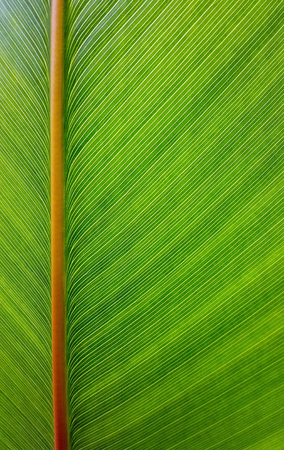 texture of growing leaf surface