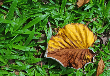 Yellow leaves falling on the grass.