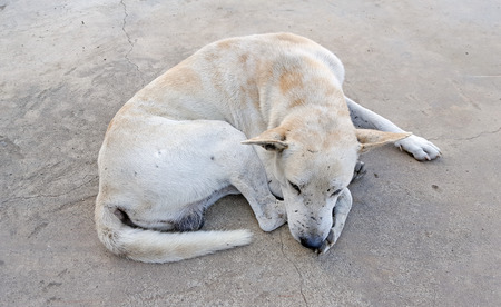 street dog in temple