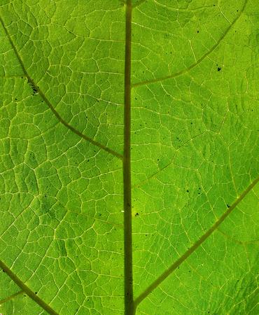 closeup a green leaf texture under sunlight