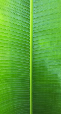 closeup a green leaf texture