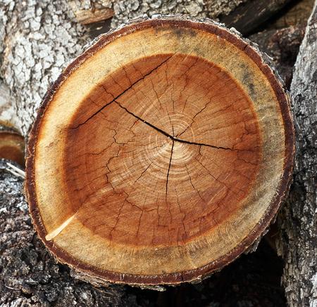 suface of tree stump