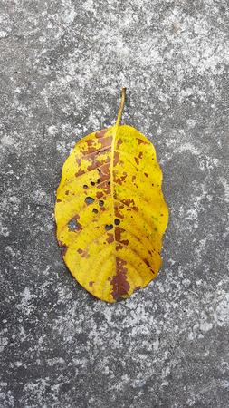 yellow leave on concrete floor