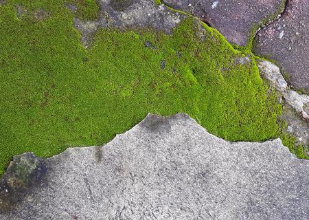 green moss on dirty cement floor