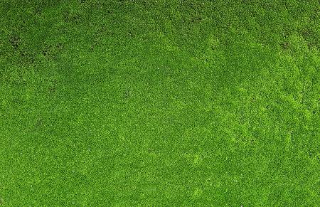 green moss texture Stock Photo