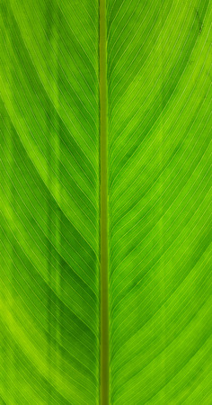 close up leaf texture Stock Photo