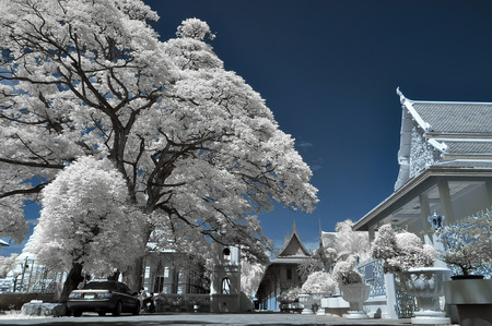 Outdoor trees in the temple, taken in Near Infrared