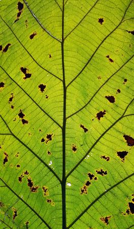 close up a trek leaf texture