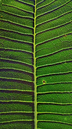 close up leaf texture with shadow
