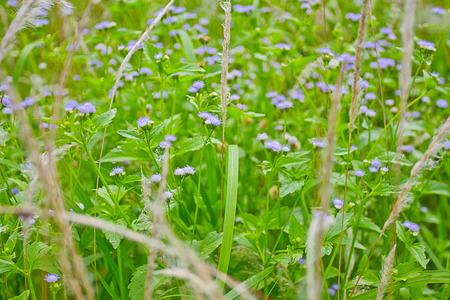plantae: Flower grass