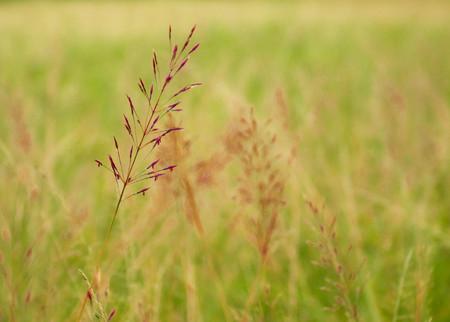 Flower grass beside the road,beautiful grass,