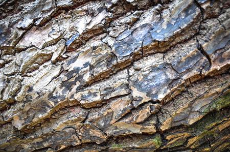 innate: Bark background
