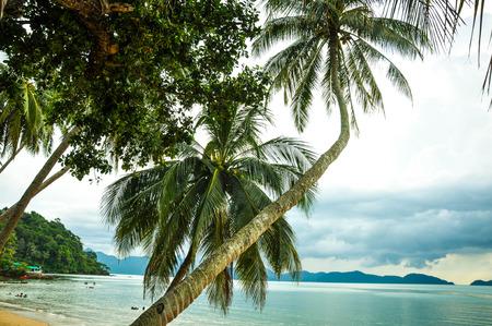 oxytocin: Tropical beach with coconut tree Stock Photo