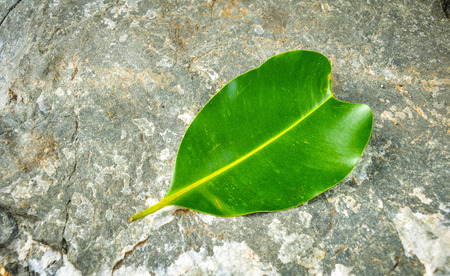 antecedents: Green leave on stone beckground Stock Photo