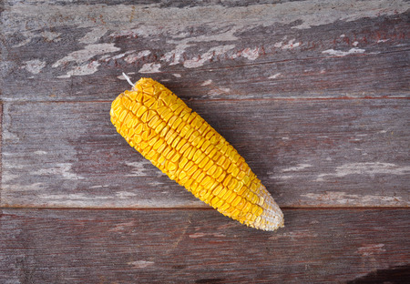 antecedents: dried corn background
