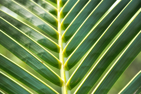 behind the scenes: Green coconut leaf pattern